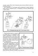Энциклопедия начинающего огородника и садовода в картинках — фото, картинка — 11