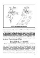 Энциклопедия начинающего огородника и садовода в картинках — фото, картинка — 13
