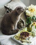 Давай позавтракаем! — фото, картинка — 2