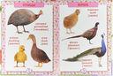 Первая энциклопедия животных для малышей — фото, картинка — 1