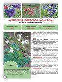 Садовые цветы — фото, картинка — 4