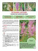 Садовые цветы — фото, картинка — 5
