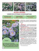Садовые цветы — фото, картинка — 6